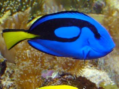 Segala Yang Anda Mau: 10 Ikan - Ikan Cantik Hiasan Akua