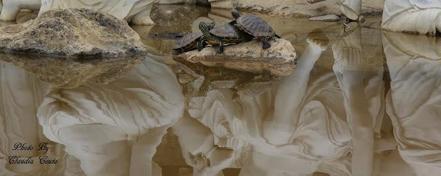 Uma fotografia inespera de tres tartarugas a brincar em cima de uma pedra. Com tanto espaço a sua volta tornou-se interessante como as tres gostam de estar no mesmo sitio durante bastante tempo, pois acabei por estar la cerca de uma hora.