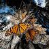 أكثر 10 صور مذهلة لهجرة الحيوانات