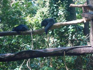 black bears in zoobic safari