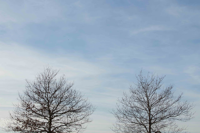 two bare trees against a blue sky