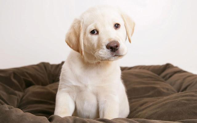 cute puppy eyes wide