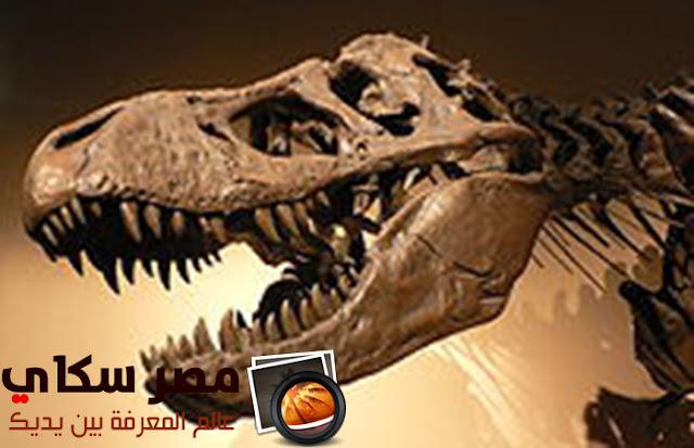 ماهى الحفريات والآثار الدالة عليها Fossils