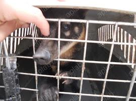VICTORIA! 26 animales fueron trasladados