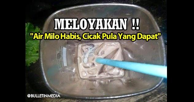 MELOYAKAN !! 'Air Milo Hampir Habis Di Minum, Cicak Pula Yang Dapat'..
