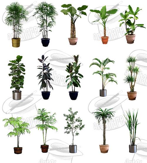 Imagenes de plantas para interiores en png recursos - Plantas decorativas de interior ...