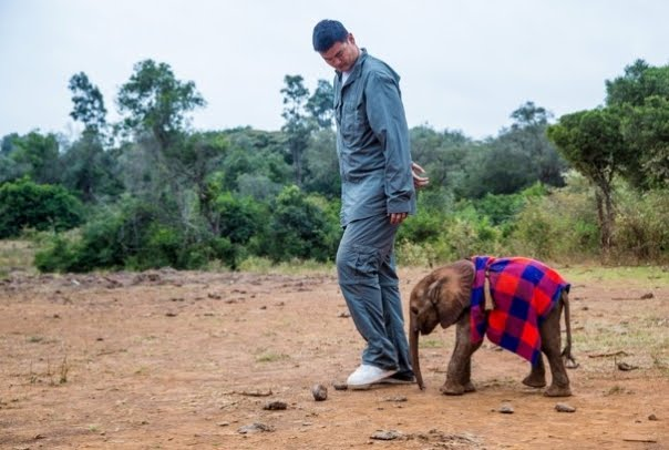 Yao Ming uses his star image to help fight elephants, rhino poaching (Video)