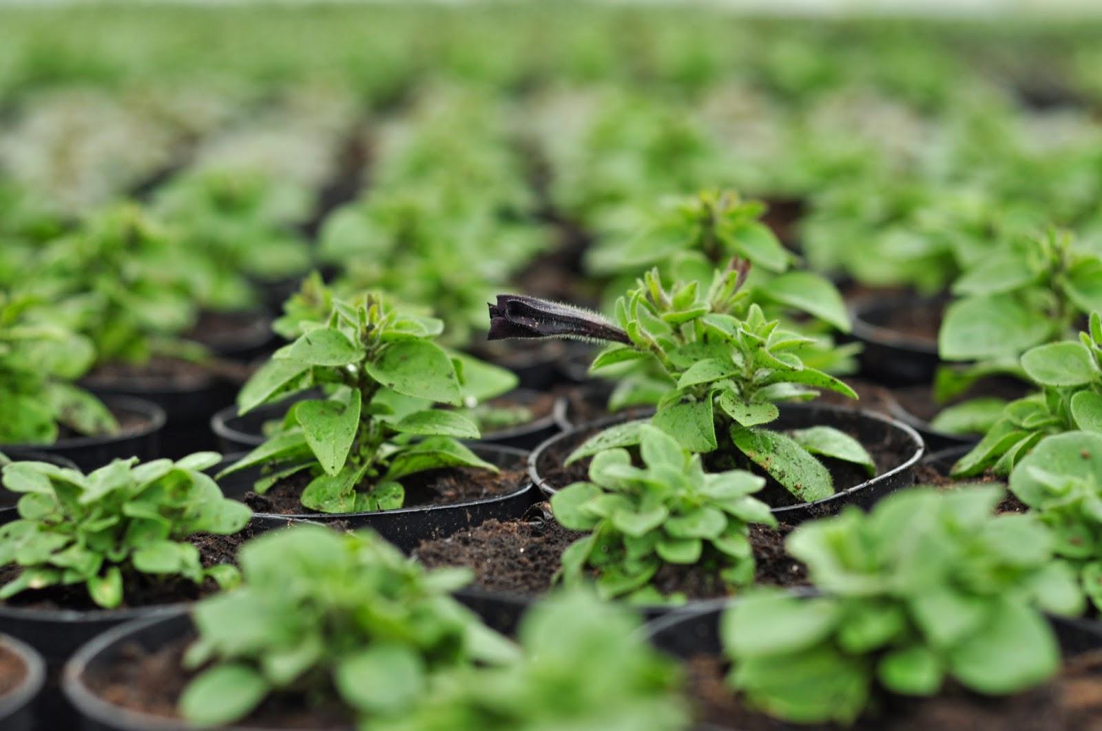 småplanter, grønne planter, gartneri