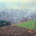 Especies de árboles de la Amazonia, en riesgo de extinción