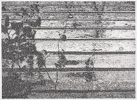 Richard Müller: Pluie sur la terrasse 2