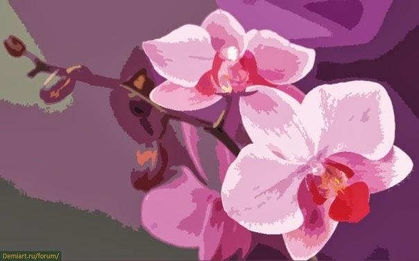 Виды орхидей. Классификация групп орхидных - Комнатные 52