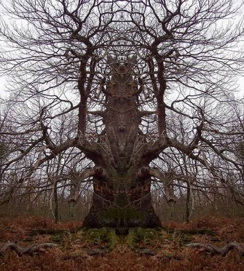 world giant tree