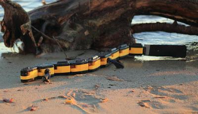 Penyusup yang Terilham Salamander