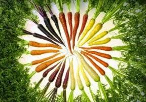 Tác dụng của cà rốt - Thuốc Đông Y