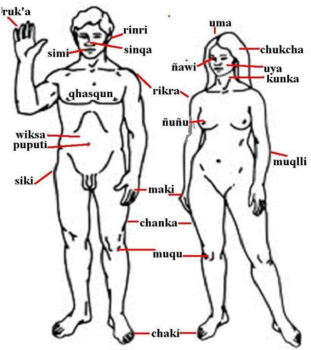 Cuerpo humano en caricaturas - Imagui