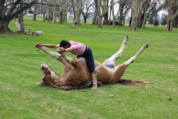 يدرب الحصان