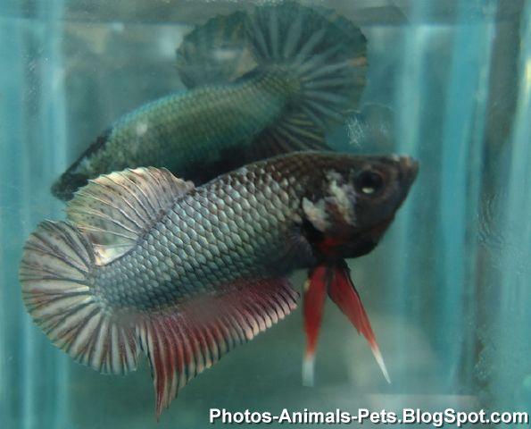 http://4.bp.blogspot.com/-5V6iu5hlXTc/TZs4O7SXT9I/AAAAAAAAAbI/i4nnWbTolg4/s1600/fish+images+_0022.jpg