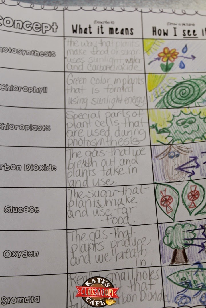 Kates science classroom cafe photosynthesis for interactive notebooks we used a few different strategies for vocabulary practice including card sorts splat and this how i see it graphic organizer that encourages students to ccuart Image collections