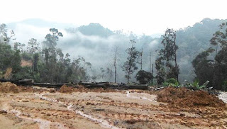 Gambar didakwa bukti pembalakan di Hutan Lipur Lentang