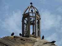 La Cúpula derruida por el tiempo, nido de buitres americanos