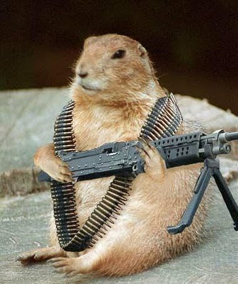 Funny Groundhog Picture with a Gun