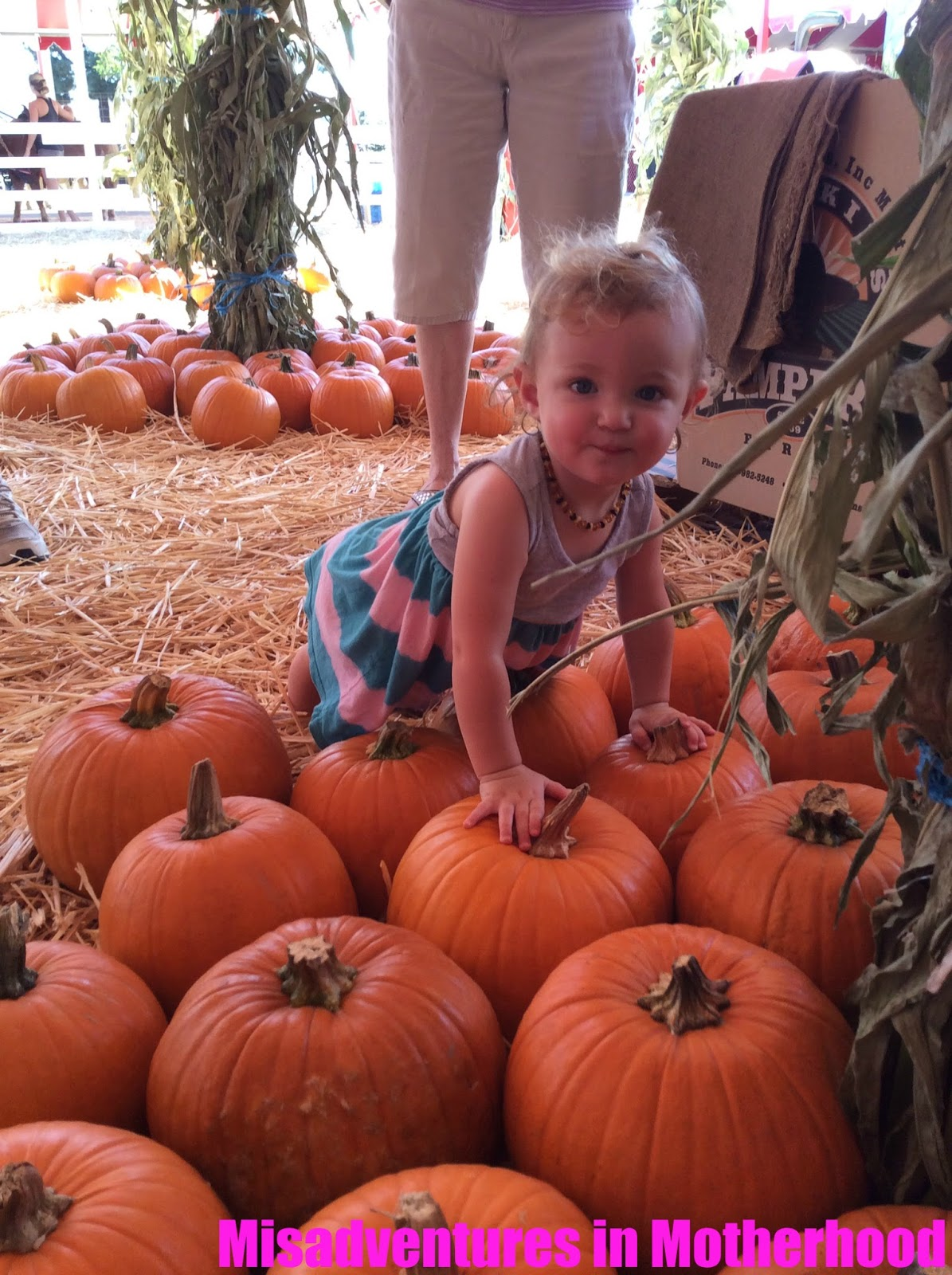 Torrance pumpkin patch
