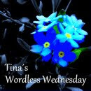 Tina's Wordless Wednesday