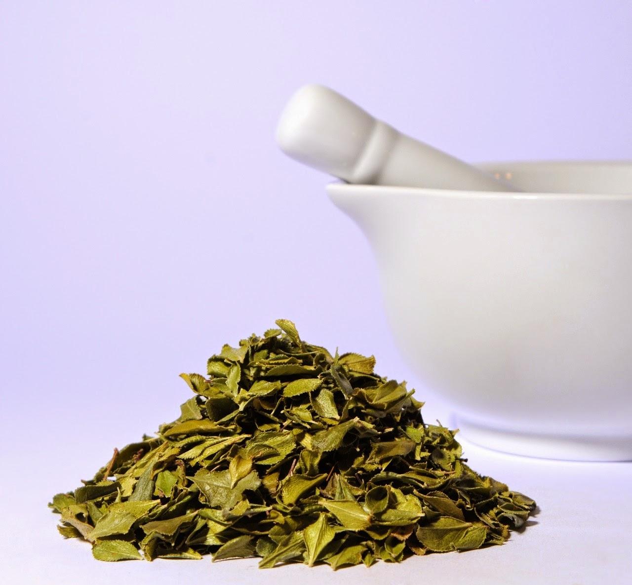 Buchu Tea Benefits Healthy Tea 101