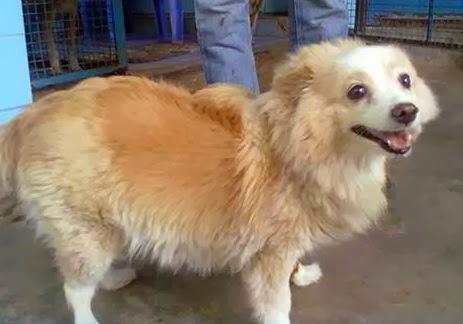 Service Dog Adoptions Fress