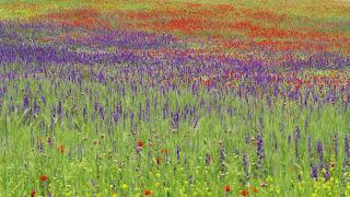 las flores silvestres forman bellos paisajes