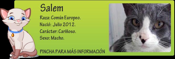 http://mirada-animal-toledo.blogspot.com.es/2014/07/salem-atropellado-y-abandonado-su-suerte.html