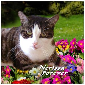 ❤️ Nerissa ❤️