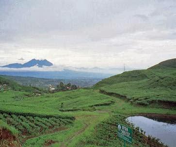 Kawasan puncak Bogor