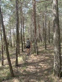 Camí pel bosc del Petaca