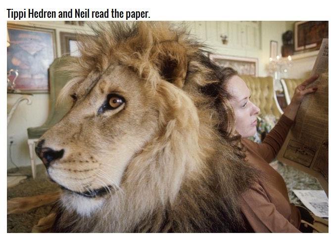 Haiwan Peliharaan Singa Yang Awesome Habis