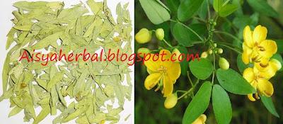 senna obat herba untuk sembelit