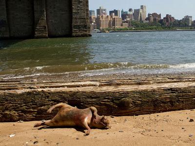 Makhluk Aneh dan Pelik Ditemui Di Bawah Jambatan