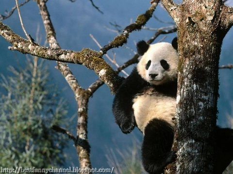 Very funny panda.