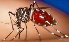 penyakit viirus zika