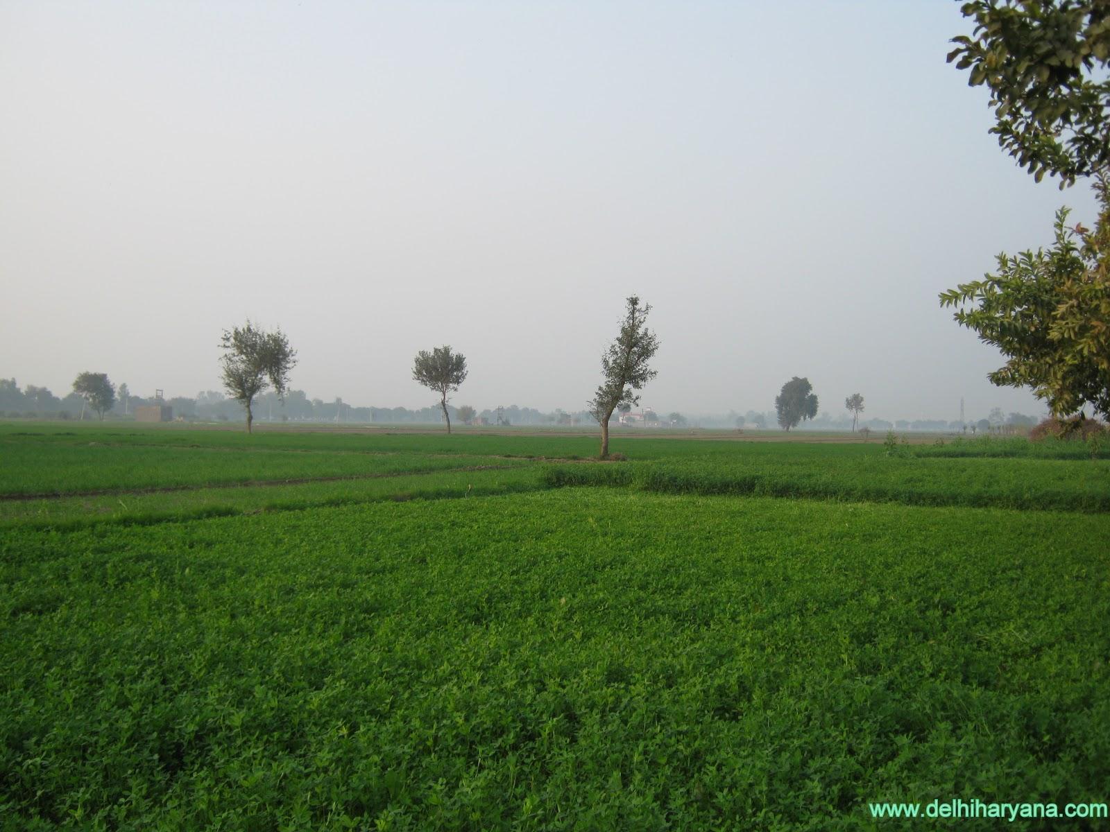 http://4.bp.blogspot.com/-5Y6-RpxpWOY/TpFoTiqgnfI/AAAAAAAAFMo/B8KZAD_vxVc/s1600/Green_farm_of_Haryana.jpg