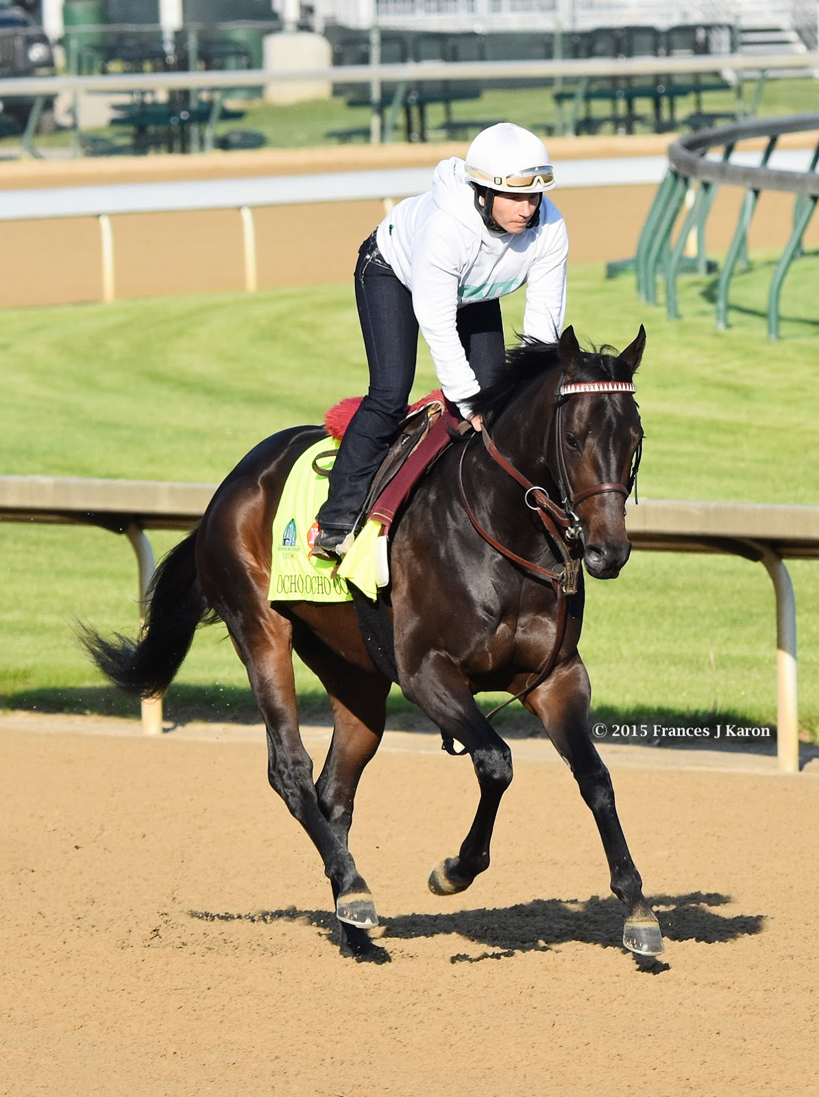 The Big Horse Sire, Tiznow, | Thoroughbred horse racing, Horses, Big horses