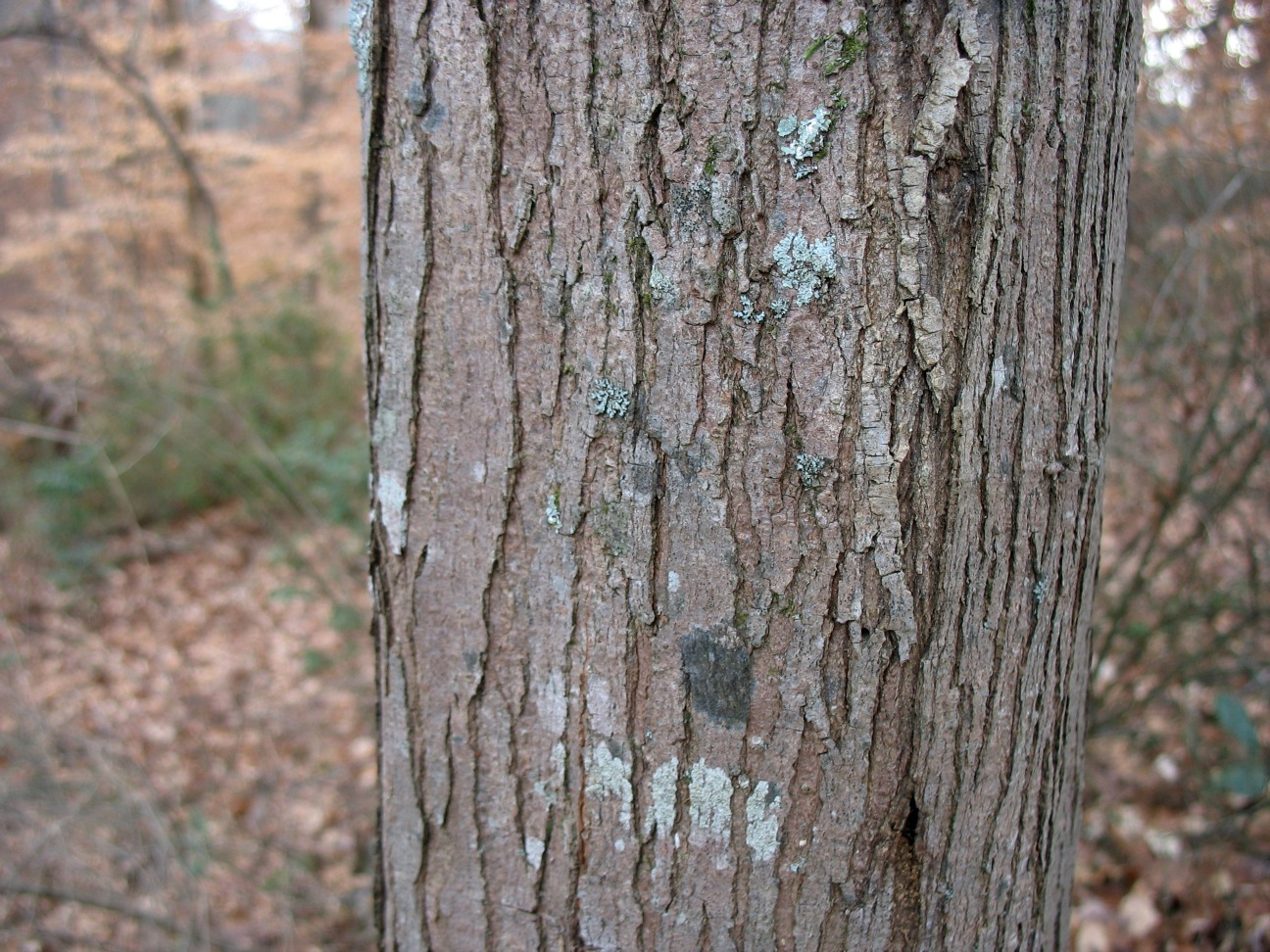 tree park maple - photo #38