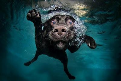 Perro bajo el agua