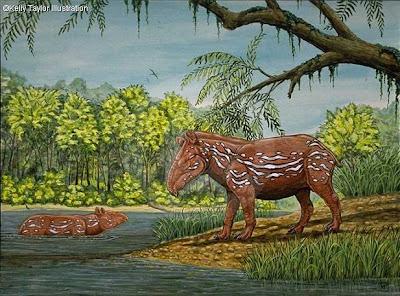 tapiridae prehistorica Miotapirus
