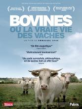 BOVINES OU LA VRAIE VIE DES VACHES AU CINEMA
