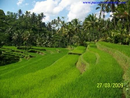 Guia de Ubud: compras, paseos y transporte en bemo en Ubud