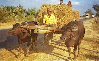Postcard of Bangladesh Bull Cart