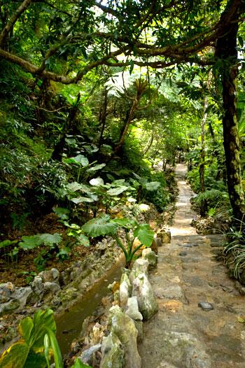 沖繩-景點-名護-山原亞熱帶園-やんばる憩いの森-推薦-親子-自由行-旅遊-Okinawa-Nago