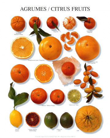 fruit list citrus fruit