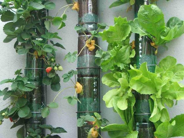 mini jardim curitiba:Têm várias formas de fazer uma horta suspensa, veja os exemplos: